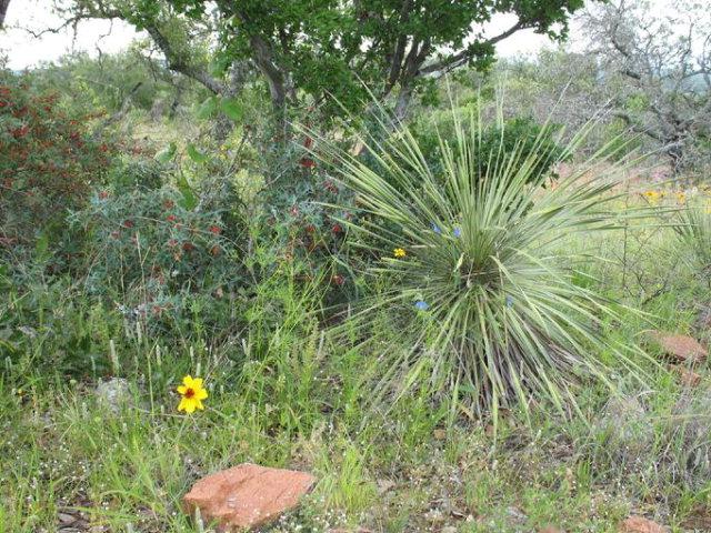 0000 Watch Mountain Rd, Llano, TX 78643