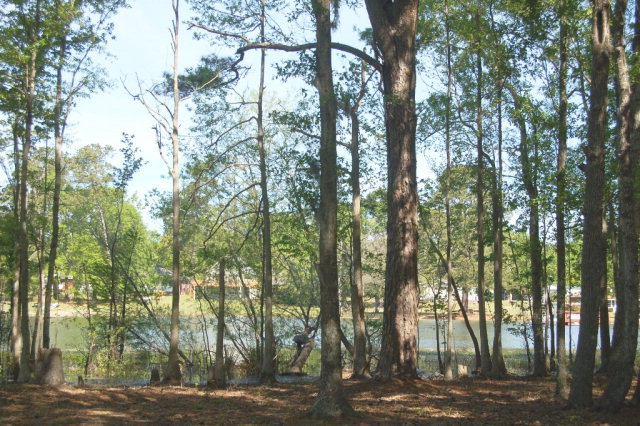 TBD  COTTAGE DRIVE Summerton, SC 29148