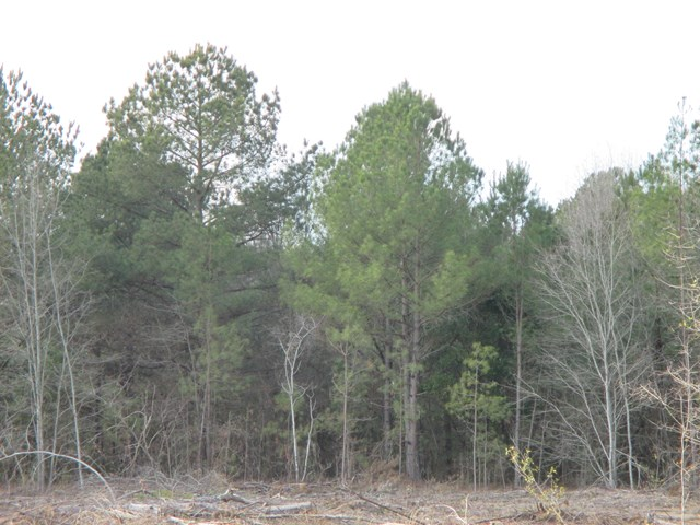 0  NW of Brohum Camp Rd Wedgefield, SC 29168