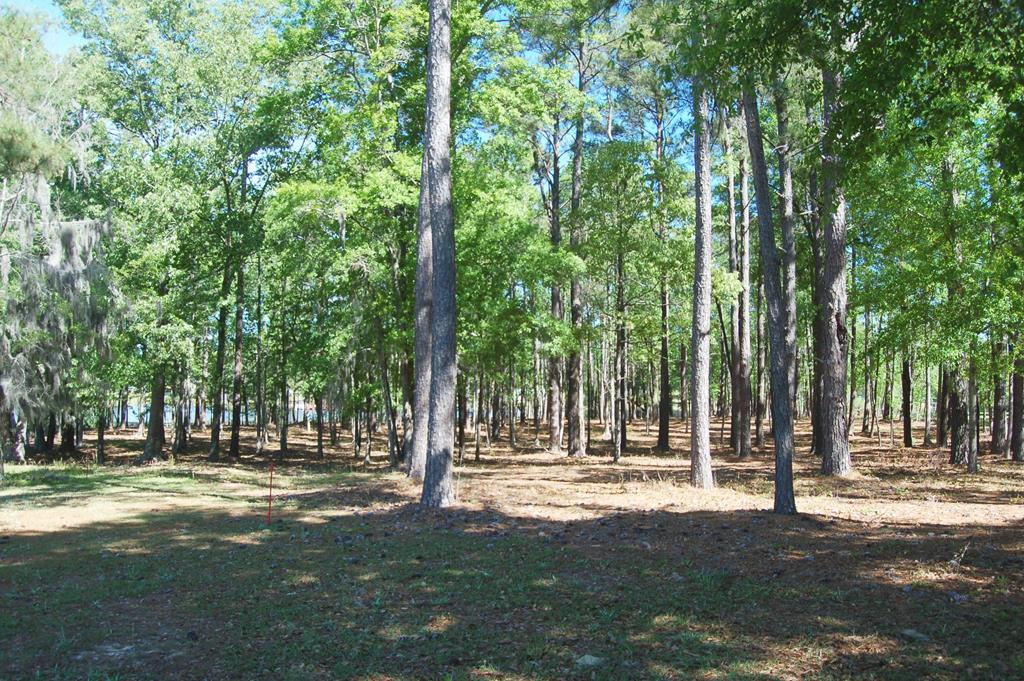 TBD Cottage Dr Summerton, SC 29148