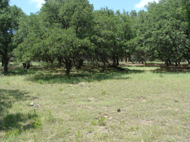 S Vintage Oaks Dr, Fredericksburg, TX 78624