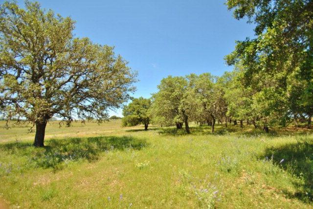 909 N Ranch Rd 783, Harper, TX 78631