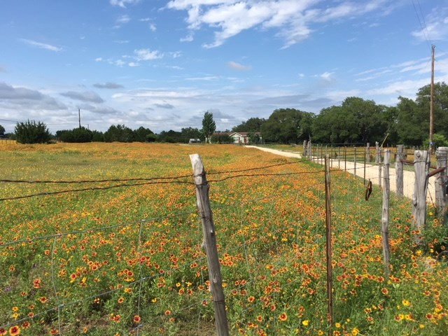 608 Rangeland, Blanco, TX 78606