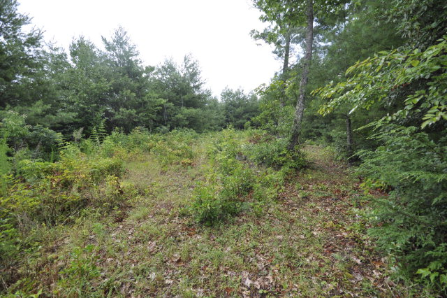 700 Piney Knob, MURPHY, NC 28906