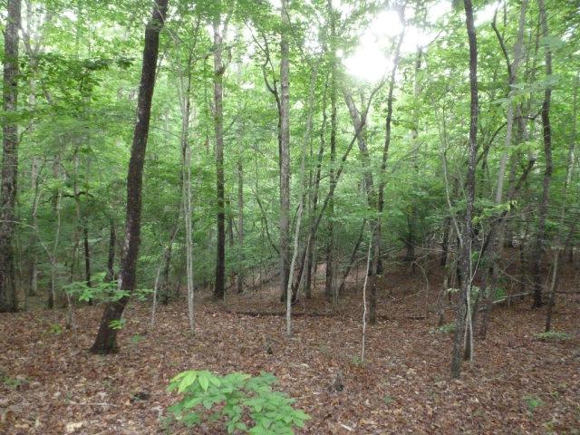 Lot 14 Mustang Trail, BLAIRSVILLE, GA 30512