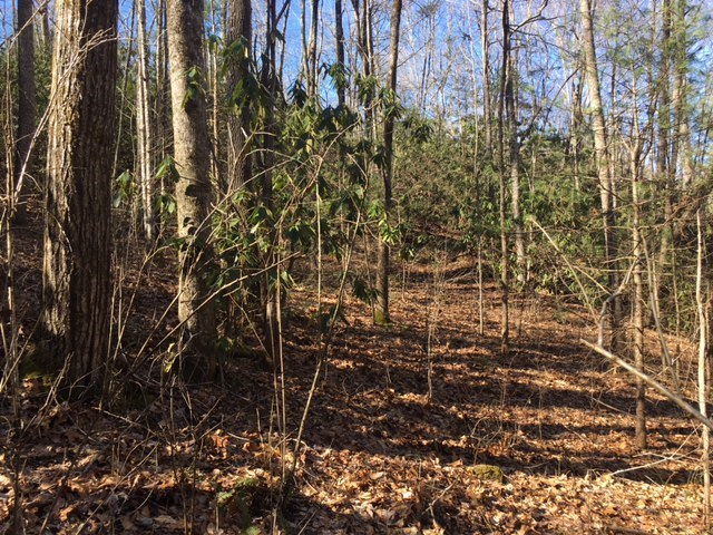 TBD Whispering Pines Hollow, ANDREWS, NC 28901