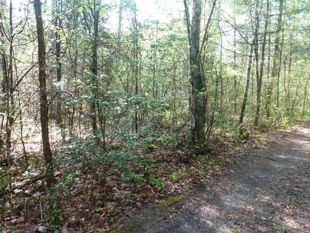00 And Creek Road, MURPHY, NC 28906