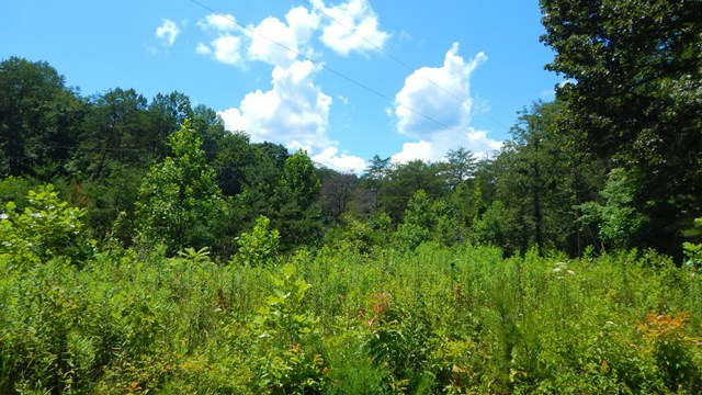 Nicely Road, HAYESVILLE, NC 28904