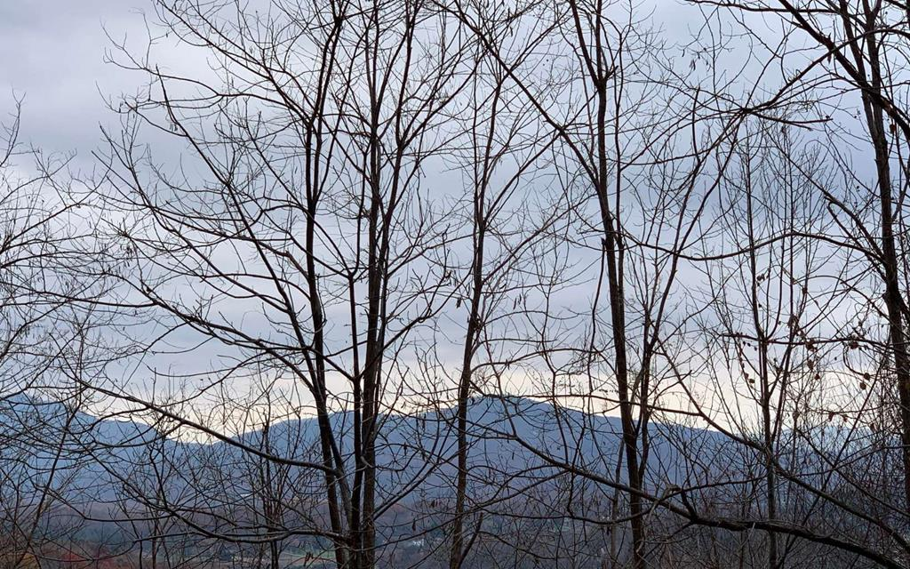 BEAUTIFULLY WOODED NORTH CAROLINA MOUNTAIN LOT! Located within minutes of Lake Chatuge and the mountain biking trails of Jackrabbit Trails, this lot offers paved road access, nice mountain views and room to spread out. The perfect place to build your mountain retreat!!