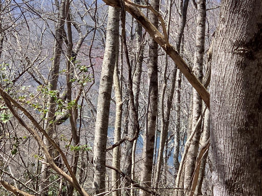 Good Lot with seasonal lake views. Great Location for a vacation rental or a private mountain getaway.  Conventionally located to several area attractions such as Appalachian and Bartram Trails, Nantahala Gorge and Lake Nantahala.  Don't let this one getaway