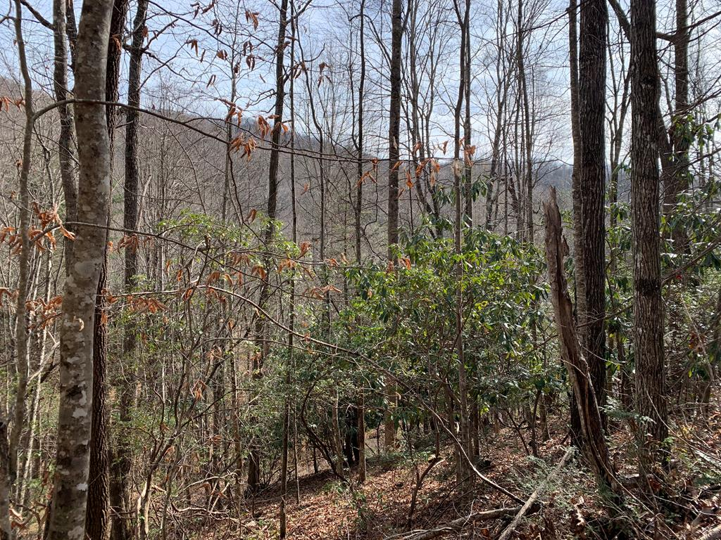 Great laying lot.  Close to several area hiking trails- Appalachian and Bartram Trails, Lake Nantahala and the Nantahala Gorge.  Good Location for a mountain getaway