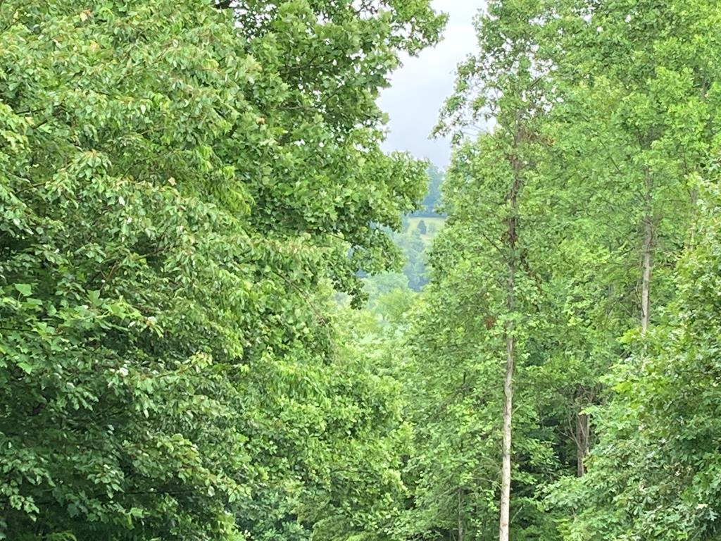 Awesome Mountain Views with tree clearing are yours when you purchase this property in a small subdivision of nice homes.