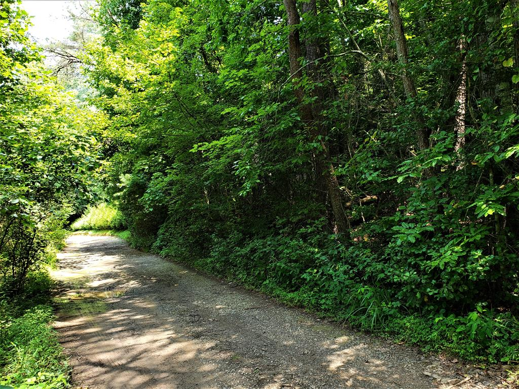 Unrestricted lot! Get away from it all in this peaceful neighborhood. Wooded, rolling land with easy access to build a cabin or park your camper. There is another roughed in road that will take you to the backside of the acreage, but suggest 4 wheel drive to access.