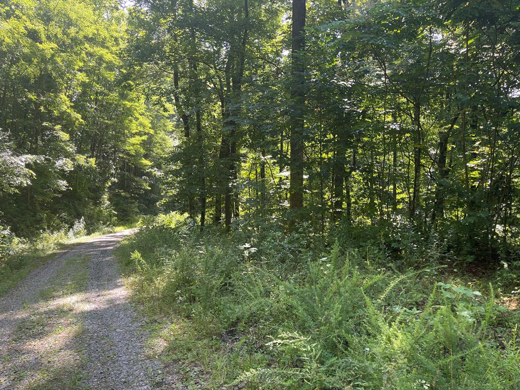 Wooded lot in beautiful North Ridge High Meadows! Build you dreams in Hayesville, NC! Close to Lake Chatuge. Build your dreams in the incredible Appalachian Mountains!