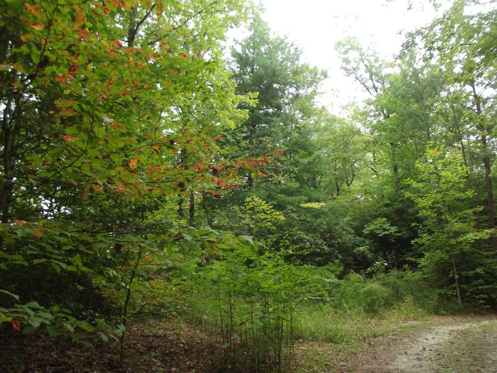 Beautiful acreage, buildable lot with amazing panoramic view, good access and building site with miles of view of Andrews Valley. Very desirable area to build your mountain dream home! Close to shopping, white water rafting, hiking trails and Western Carolina Airport. This property is offered for sale on a cash purchase. Buyers that might want to get a loan must have a verification letter from a lender that funds are approved and available. Electric already available on site.