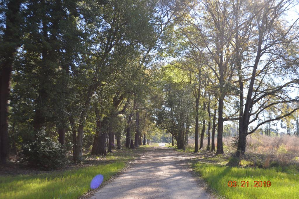 Woodlane Driveway