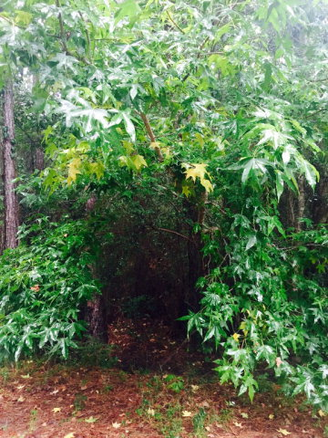 00  Lot 26, Gautier, Other, MS 39553