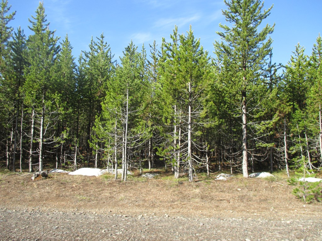 4507 Weslin Trail