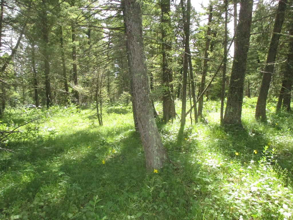 4192 Wildwood Circle