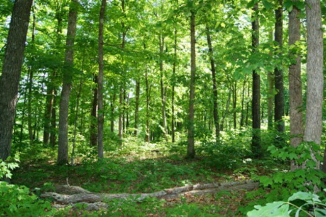 Featured Property in ALLONS, TN, 38541