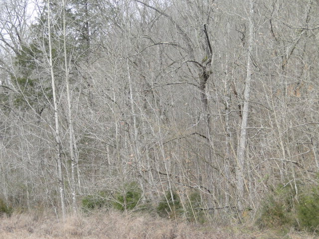 Land for Sale, ListingId:25731146, location: Lot 63 Tranquility Drive Smithville 37166