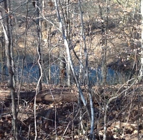 Land for Sale, ListingId:26541311, location: 00 RANDOLPH MILL RD. Cookeville 38506