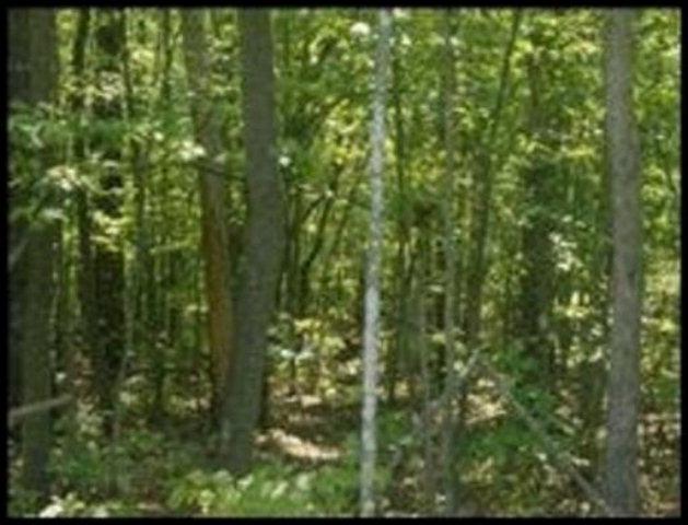 Real Estate for Sale, ListingId: 28000003, Jamestown,TN38556