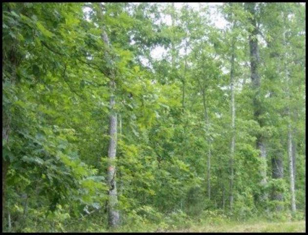 Real Estate for Sale, ListingId: 28019852, Jamestown,TN38556