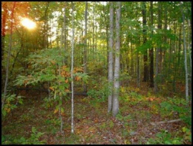 Real Estate for Sale, ListingId: 28766006, Jamestown, TN  38556