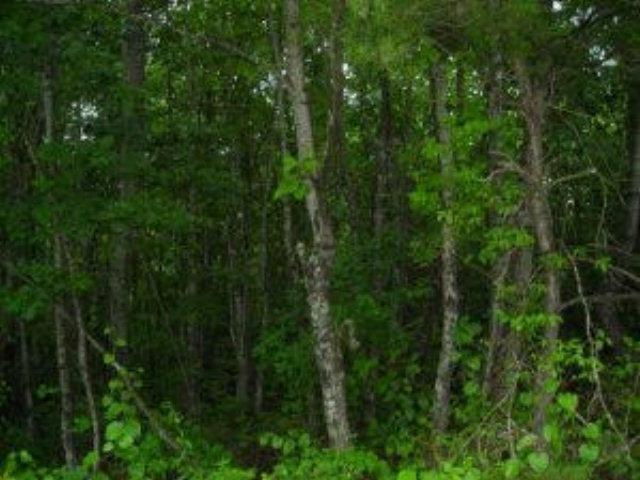Real Estate for Sale, ListingId: 28766010, Jamestown,TN38556