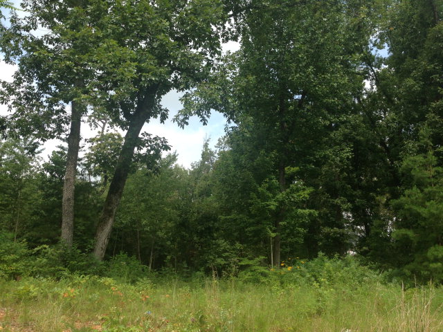 Land for Sale, ListingId:29573589, location: 4966 CURTIS DRIVE Cookeville 38506