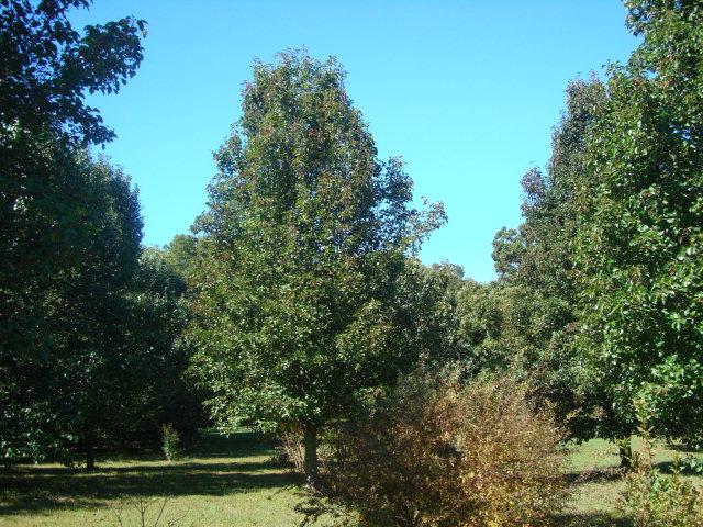Real Estate for Sale, ListingId: 30242692, Gainesboro,TN38562