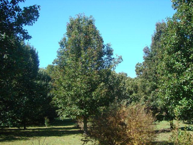 Real Estate for Sale, ListingId: 33923093, Gainesboro,TN38562