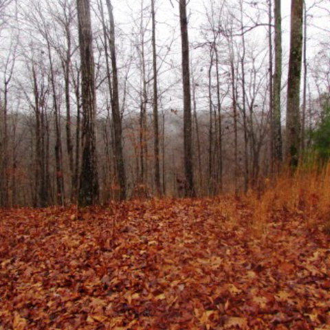 Land for Sale, ListingId:30990882, location: 000 Old Stevens Road Byrdstown 38549