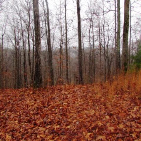 Land for Sale, ListingId:30990882, location: 000 Old Stevens Road Byrdstown 38549