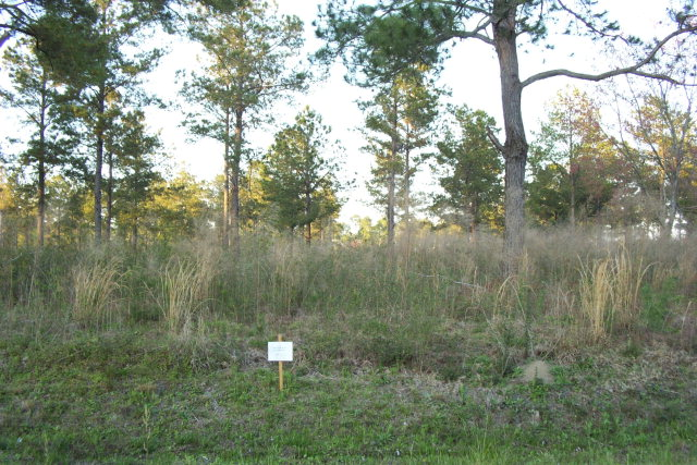 Lot 12 Sweetwater, Ft. Gaines, GA 31776