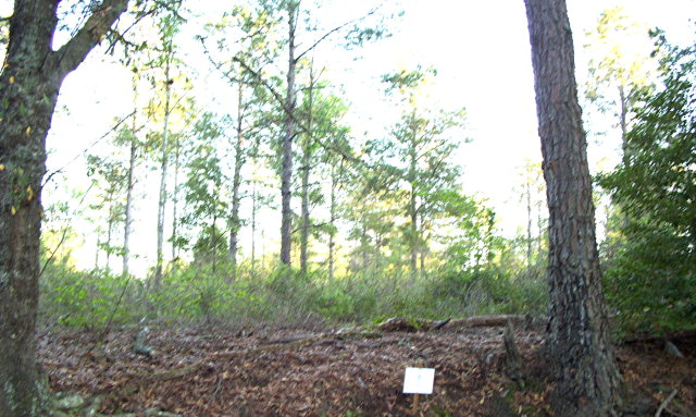 Lot # 2 Sweetwater, Moultrie, GA 31768