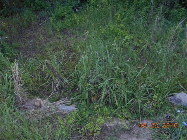 00 Gravel Hill Rd, Baconton, GA 31716