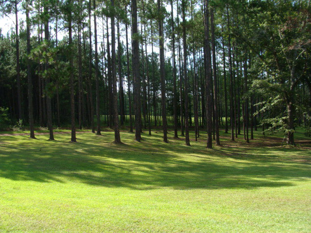 This hidden treasure is located south of Cairo off of GA 93. You could build your dream home in the front area of the property and have land to hunt in the back. Full of TURKEYS and DEER!!! There is a creek that runs through the back of the property, so good water source for animals. Priced to sell! Call today for your showing!!!