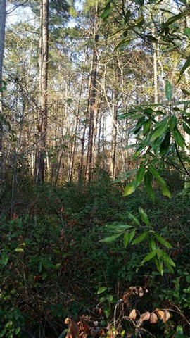 """NICE BUILDABLE LOT. Tax assessors shows no flood zone. This is an undeveloped wooded lot with city amenities in the desirable area of Glen Arven Country Club.  No subdivision dues or rules except City ordinances.  Lot is 140' wide x 200' deep, on .64 acres.  """"Cut just enough trees to build and enjoy the birds and privacy."""""""