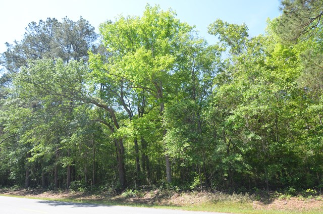 Stewart and Singletary Road, Thomasville, GA 31792