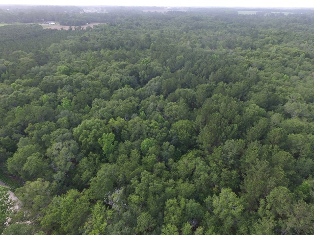 0000 (82 Acres) Dixie Rd., Dixie, GA 31629