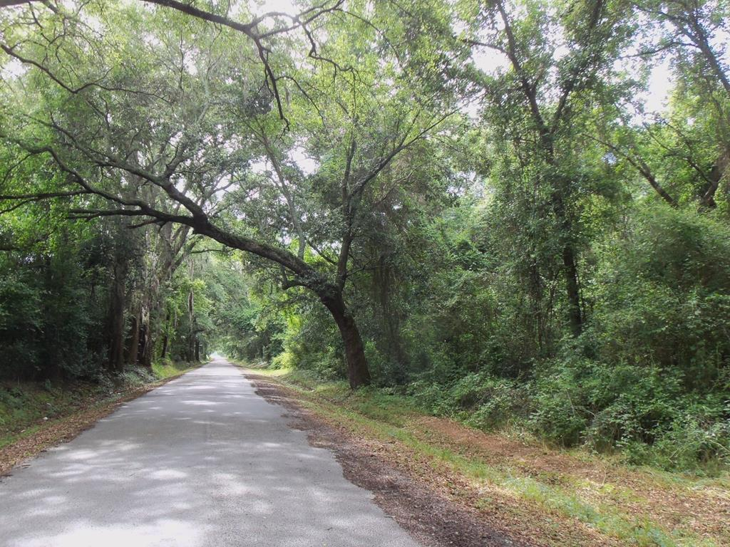 This woodland tract is ideal for recreational and residential use.  Natural hardwoods and pines throughout the tract.