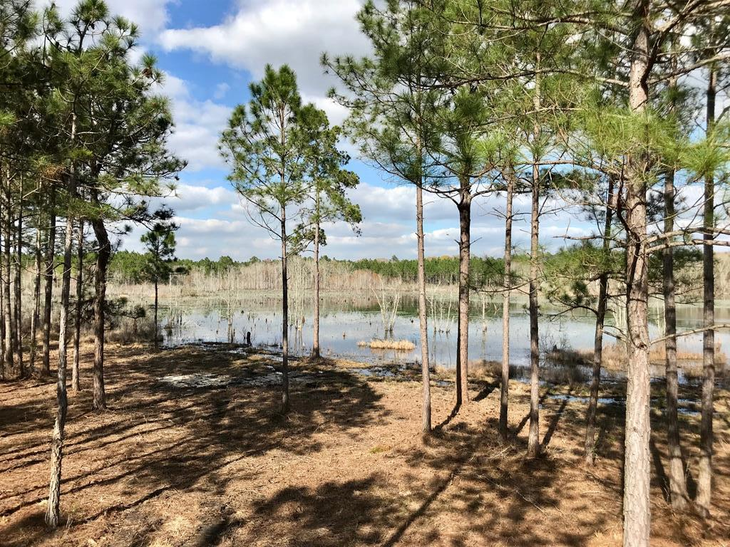 TURNKEY HUNTING AND TIMBER TRACT in Thomas County, conveniently located to Thomasville.  +/-163 acres with several home sites, and stocked pond with excellent fishing and the occasional wood duck.  Improvements include underground power, well, equipment shed, outhouse, and a lakeside viewing platform that is used for storage, camping, and that could be built on.  Property has been professionally managed for trophy deer with food plots in place and good timber.  Good interior roads and 3 gated road; fronts Rocky Ford Road and Hwy 188. This is a nice tract with easy access and in a great location.