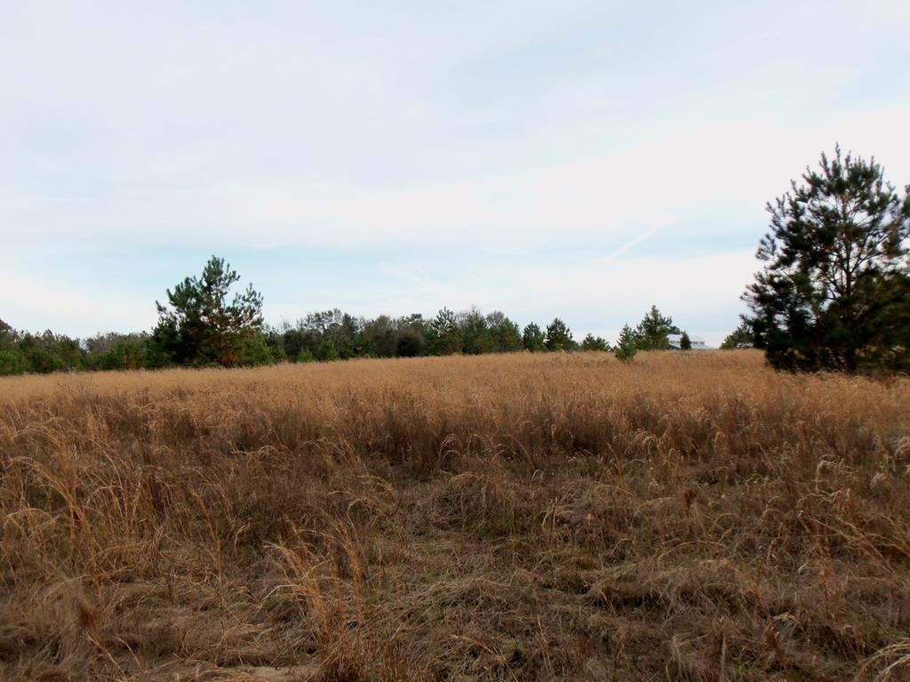 This tract has a little over 4 acres of old field that is cleared and will make a great home site.  The upland soil type is Tifton sandy loam with 5-8% slope that makes for a great view.  Approximately 5 acres of bottom land is along a wet weather drainage way with hardwoods and volunteer pines.  We are in the process of getting a driveway put in.  More information coming soon.