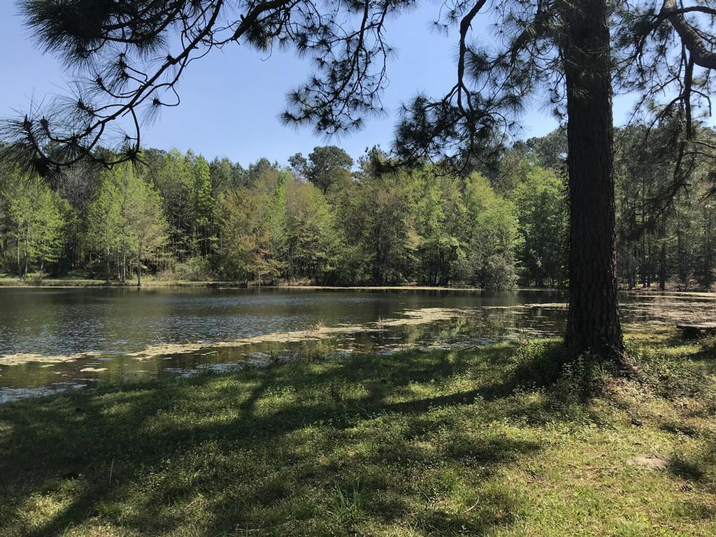 68 Acres with a Pond, Beautiful setting! Gem! So close to town.  This property has a brick home that is 3 bedroom, 2.1/2 baths.  The den has a large picture window that overlooks pond. Family room, large kitchen, Dining room, Wood Panel den with built in wall of wood bookcases. This property has been in same family for over 60 years. Many possibilities.      Must have appointment to see.