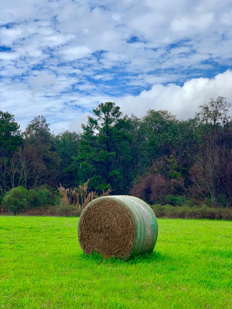 Beautiful tract of land with great combination of open land, woods, and water.  Perfect place to build a dream home and enjoy enjoy wildlife and only be minutes from downtown.  Call today!