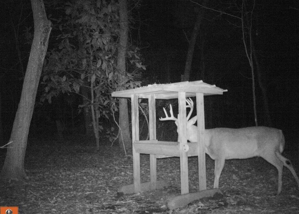 Beautiful rolling recreational tract.  Enjoy the best of what South GA has to offer with this special place.  The property has a great combination of  pine woods, hard woods (Large Live Oak Trees), and some low areas to hold the wildlife.  The deer pic is from a nearby farm.