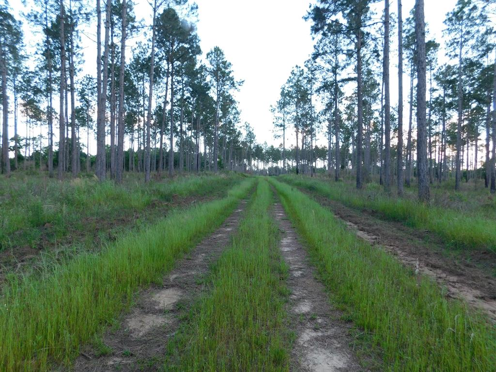 Excellent recreational and timber investment property, conveniently located 20 minutes north of Thomasville and less than 45 minutes from the Georgia/Florida Line. Abundant with wildlife excellent deer and turkey hunting. Great duck hunting potential with small pond. 40 acres of CRP Pines with the balance of the property in mature upland and bottomland hardwoods. Under CRP Program until 2021. Big Creek runs through the mature bottomland hardwoods along the northwestern side of the property providing a good water source for wildlife. Excellent cabin sites throughout the property. Good interior road system, established food plots and fire breaks.