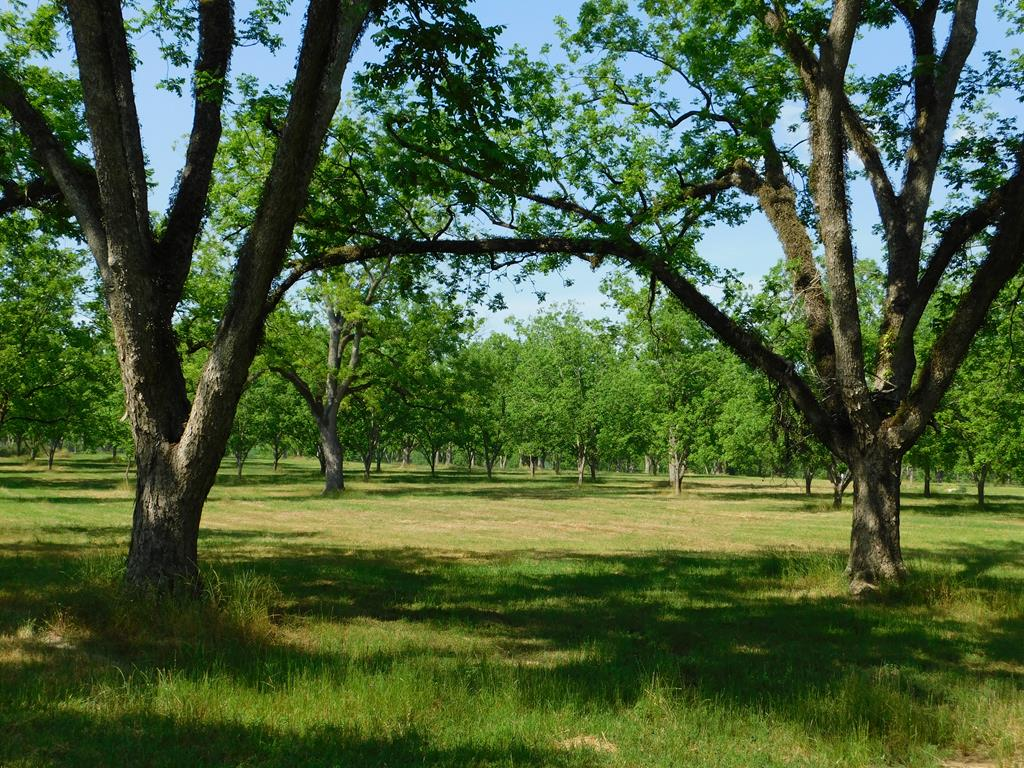 Investors and Developers look no further than Woodland Lakes Subdivision. Woodland Lakes is a great investment opportunity to purchase a quality established subdivision just outside of the Cairo city-limits in Grady County. This investment package features a total of 13 platted lots, four of which are lake frontage lots ranging in size from 25.89 acres to 3 acres, nine lots are laid out across a pecan grove ranging from 3.46 acres to 1.5 acres.